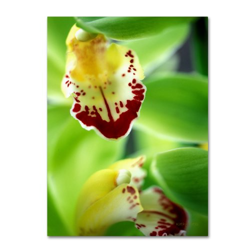 Trademark Fine Art Cymbidium Seafoam Emerald Orchid Canvas Wall Art by Kathy Yates, 22 by 32-Inch