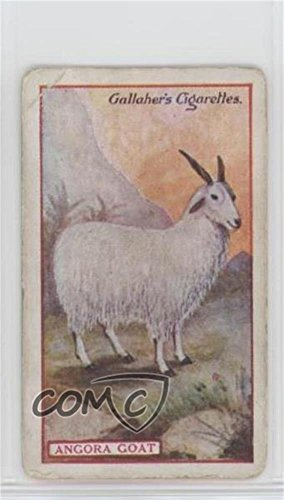 Angora Goat Ungraded COMC Poor to Fair (Trading Card) 1921 Gallaher Animals & Birds of Commercial Value - Tobacco [Base] #16 from Gallaher Animals & Birds of Commercial Value
