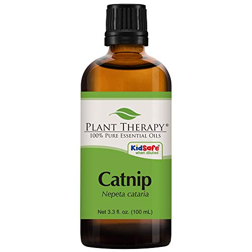 Plant Therapy Catnip Essential Oil 100% Pure, Undiluted, Natural Aromatherapy, Therapeutic Grade 100 mL (3.3 oz)