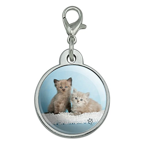 (Graphics and More Ragdoll and Tiffany Kitten Cat Friends Chrome Plated Metal Pet Dog Cat ID Tag - Small)