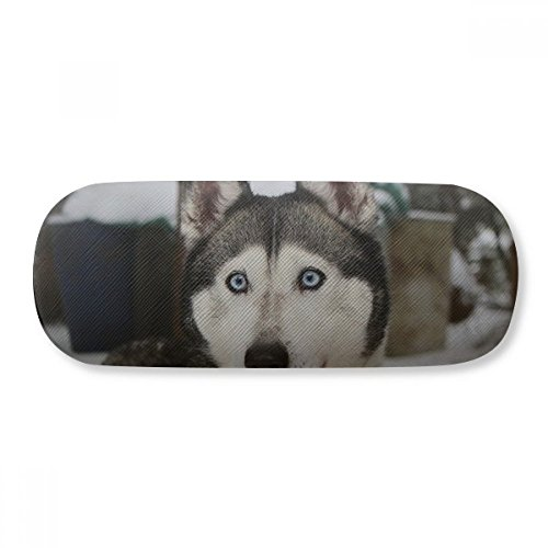 Dog Animal Snow Husky...