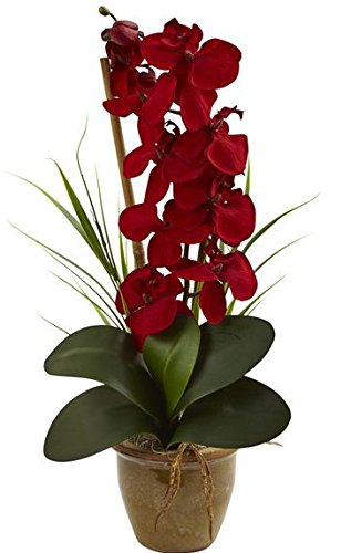SKB Family Seasonal Phalaenopsis Orchid Arrangement Blooming Plant Species Red Color