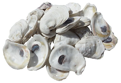 U.S. Shell, Inc., Drilled Oyster Shells, 2 to (3