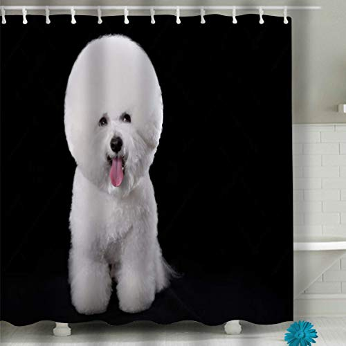 Xunulyn Shower Curtain Spa Decor by, Mildew Resistant Bathroom Decor View 60x72 INCH Bichon Frise Beautiful Portrait Dog Breed Black ba