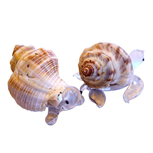 - Sansukjai 2 Pcs Turtle & Sea Turtle Figurines from Clear Blown Glass Mix Natural Shell Beach Animals Collectible Gift Home Decor#7