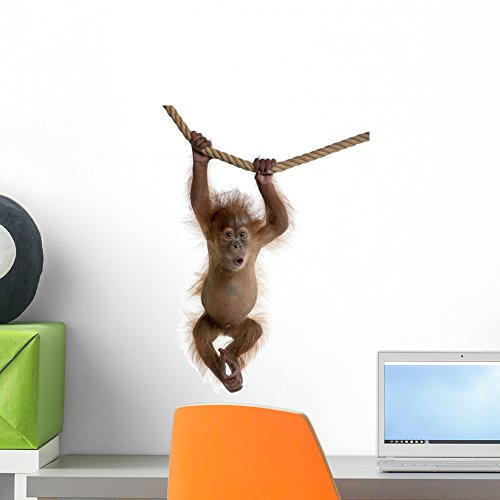 (Wallmonkeys Baby Sumatran Orangutan Hanging Wall Decal Peel and Stick Graphic (18 in H x 12 in W) WM311523)