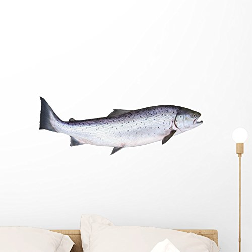 Photo Salmon White Wall Decal by Wallmonkeys Peel and Stick Graphic (24 in W x 18 in H) WM284967 Salmon Fish Wall
