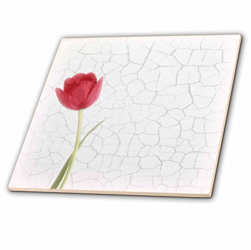 - 3dRose Janna Salak Designs Rustic Designs - Pretty Red Tulip on Faux White Crackle Paint Background - 4 Inch Ceramic Tile (ct_128527_1)