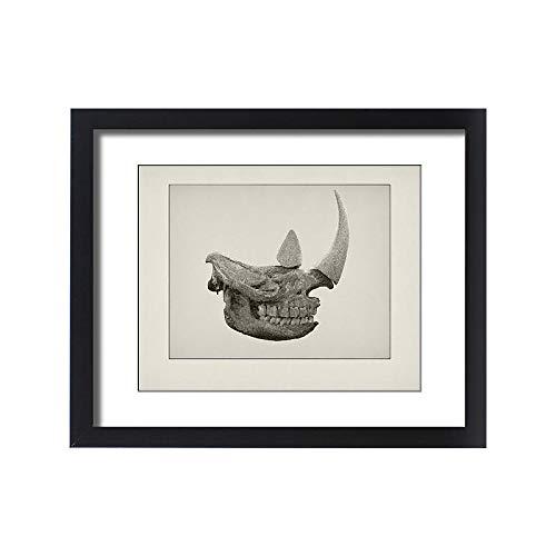 Media Storehouse Framed 20x16 Print of Rhino Skull Etching (15217978)