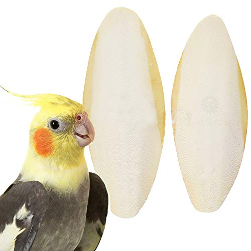 2 Cuttlefish Bones for Cockatiels - for Sharp Beaks, Healthy Bones and Nice Feathers - Prevents Malnutrition & Egg Binding - Natural, Safe & Excellent Calcium Source - NO Holder Included -