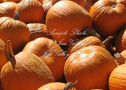 Connecticut Field Pumpkin 25 Seeds Non GMO Bright Orange Perfect for pies