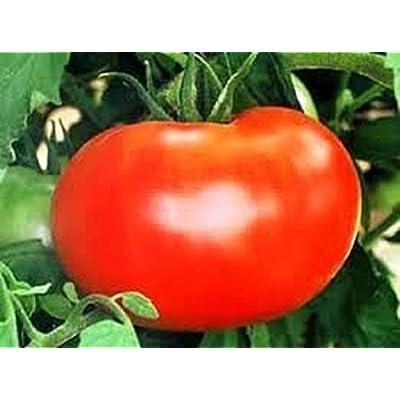 HeirloomSupplySuccess 50 Heirloom Homestead 24 Tomato Seeds : Vegetable Plants : Garden & Outdoor