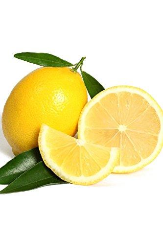 Bearss Lemon Tree, Fast Growing Lisbon Citrus (Excludes: CA,TX,LA,AZ)