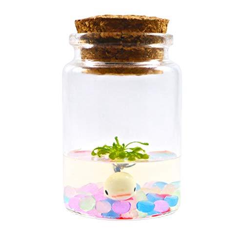Sundew Terrarium - Self Grow - Drosera spatulata - 3'' Jar by Bloomify (Image #2)