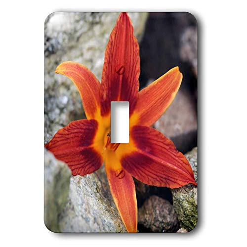3dRose Stamp City - flowers - Macro photograph of an orange tiger lily laying on some bounders. - double toggle switch (lsp_316765_2) ()