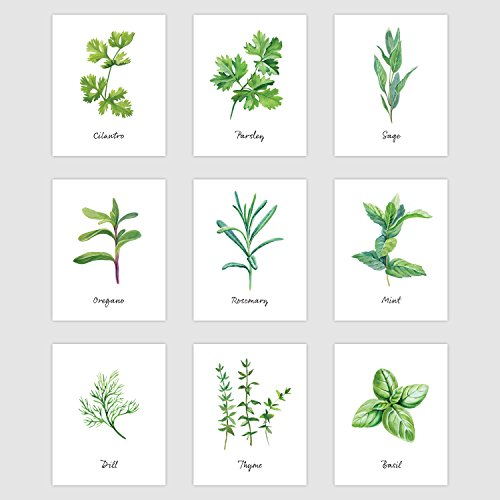 Palace Learning Kitchen Herb Botanical Prints - Wall Art Decor - Set of 9 Prints (8