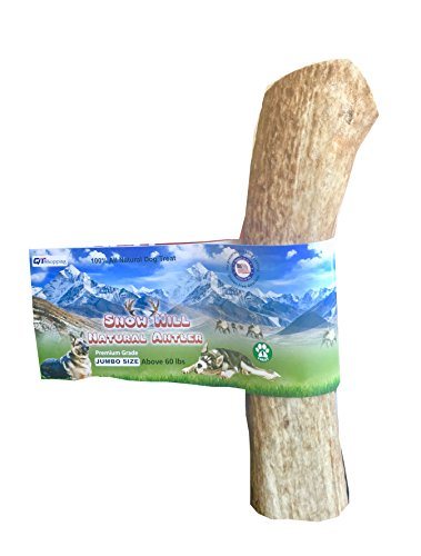 "(American Antler Dog Chews Whole, XL Size 7""+ Himalayan Snow Hill Elk horn Natural Shed, Premium, Grade A For Jumbo Size Dog)"