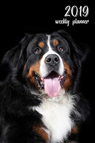 2019 Weekly Planner: 6x9 in. Bernese Mountain Dog 52 Weekly  Calendar Schedule Organizer Appointment Journal Notebook for dog fans ()