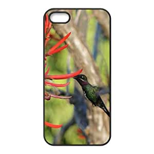 Hummingbird Hight Quality Plastic Case for Iphone 5s