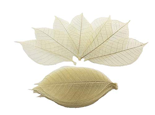 Tree Leaf Natural - 100 Nature brown color, No paint. Skeleton Leaves Rubber Tree Natural Scrapbooking Craft DIY Card Wedding.