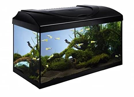 Nobby rectangular frontal cristal Acuario, 60 x 30 x 30 cm: Amazon.es: Productos para mascotas