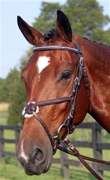 Nunn Finer Figure Eight Bridle - HAVABRASS\HORSE