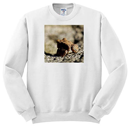 3dRose Stamp City - Amphibian - Macro Photograph of The Butt of an American Toad. - Adult Sweatshirt 2XL (ss_315598_5)