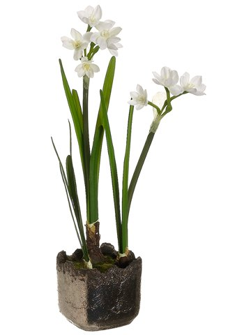 Amazon silk plants direct paperwhite narcissus pack of 6 silk plants direct paperwhite narcissus pack of 6 mightylinksfo