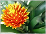 Shopvise 200 Pcs Cactus Bromeliad Rare Colorful Flower Plant Courtyard Mini Plant Succulent DIY Home Garden: 1