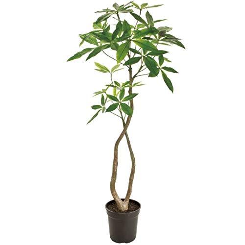 人工観葉植物 バキラ4F 高さ120cm fg22000 (代引き不可) インテリアグリーン 造花 B07SWBRN3P