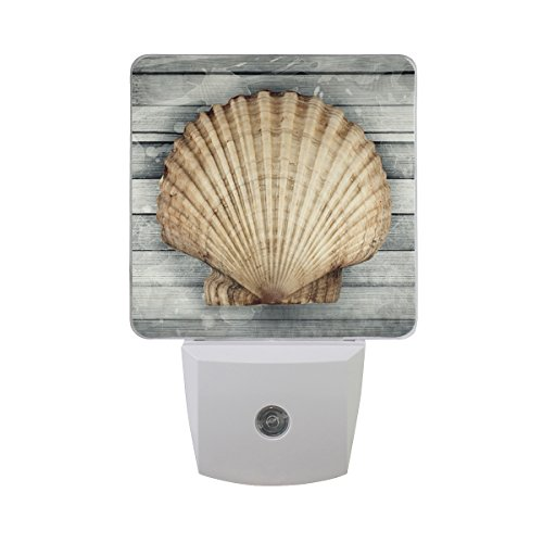 Led Shell Night Light in US - 1