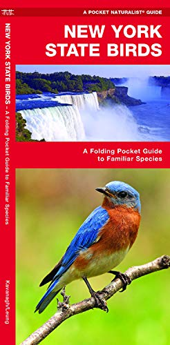 New York State Birds: A Folding Pocket Guide to Familiar Species (Wildlife and Nature Identification)