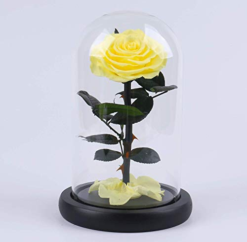 "The ultimate ""Beauty and the Beast"" keepsake,Forever Flowers,Preserved Real Fresh Rose in Glass Dome Cover with Gift Box for Her,Valentine's Day, Mother's Day, Anniversary, Birthday, ()"
