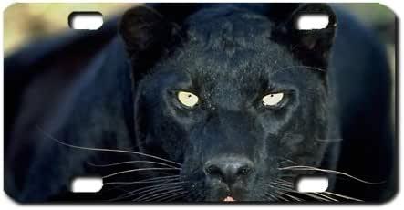 Amazon.es: Black Panther Mini matrícula motocicletas, ATV ...