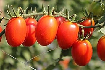 """Tomate""""Tutti Frutti F1"""" - variedad de cóctel alto para el cultivo ..."""