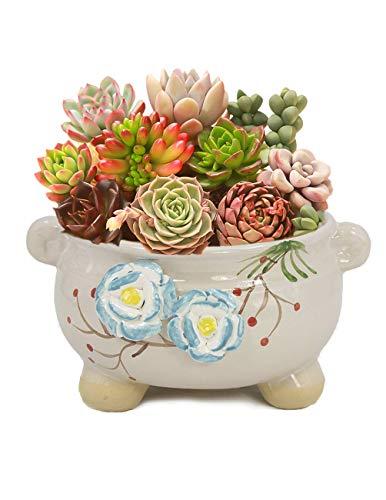 Dahlia Hand Carved Ceramic Succulent Planter/Plant Pot/Flower Pot/Bonsai Pot, Two Blue Roses -