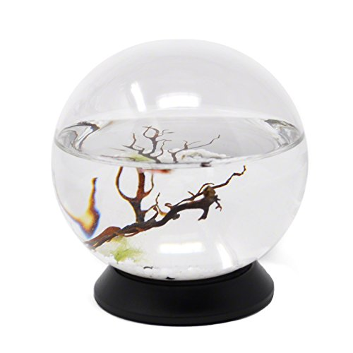 EcoSphere Closed Aquatic Ecosystem, Small Sphere, with Revolving Base