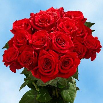 g Stem Red Roses - 75 Freedom Roses Long (Freedom Rose)