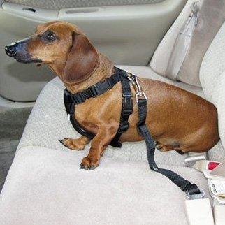 dog seat belts