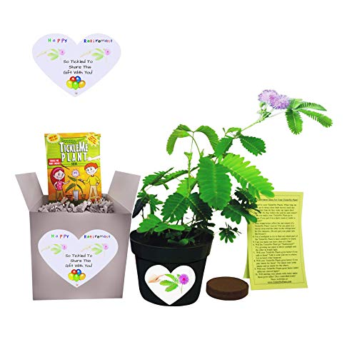 Fun Alternative to a Retirement Card. Say Happy Retirement - So Tickled to Share This Gift with You. - Grow The House Plant That Closes Its Leaves and Lowers ts Branches When You Tickle it!