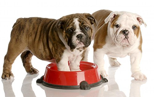 Price comparison product image Wallmonkeys Two Bulldogs Puppies and Dog Food Dish Peel and Stick Wall Decals WM149989 (24 in W x 15 in H)