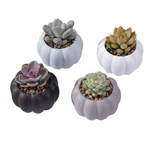 Youfui Ceramic Animal Flowerpot Succulent Plants Container Desk Mini Ornaments (4pcs Pumpkin ()