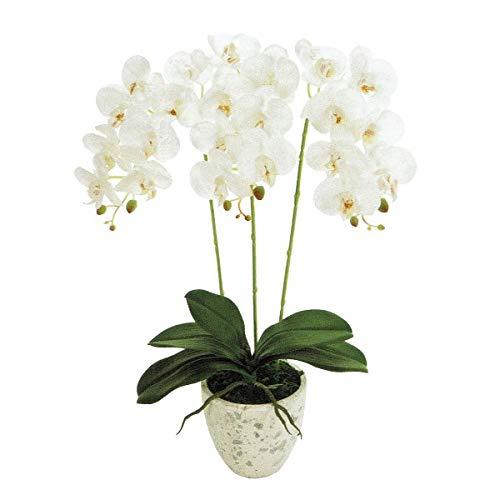 人工観葉植物 ピュアオーキッド3本立(フローラファレノ)ホワイト 光触媒加工 高さ50cm zv8080 (代引き不可) インテリアグリーン 造花 B07SV6LZQ1