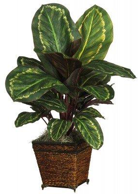 Nearly Natural Maranta with Basket Silk Plant