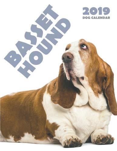 Basset Hound 2019 Dog Calendar