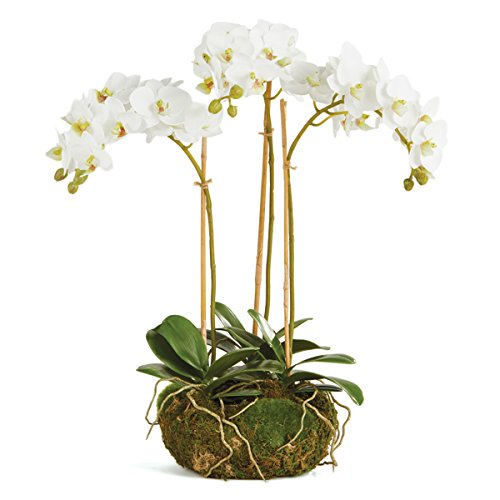 CONSERVATORY PHALAENOPSIS ORCHID MINI GARDEN DROP-IN 16-INCH