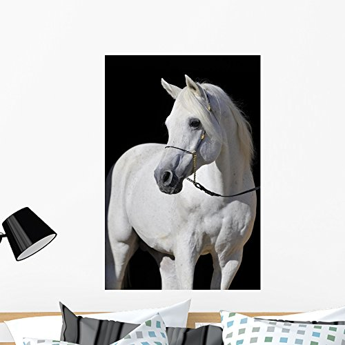Wallmonkeys White Arabian Horse Stallion Portrait on Black Wall Decal Peel and Stick Graphic WM97570 (36 in H x 24 in W) by Wallmonkeys