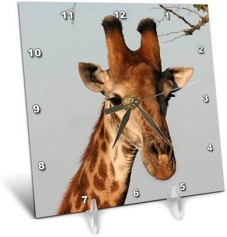 3dRose dc_20123_1 South African Giraffe Head Face Sky Background Desk Clock, 6 by 6-Inch