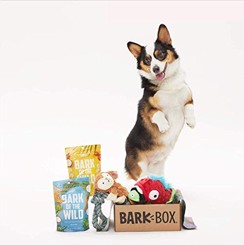 Barkbox Starter Kit Assortment Dog Plush Toys, Chew Toys, Squeak Toys Pack of 4