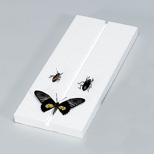 Insect Mounting Board, Styrofoam, Pack of 10